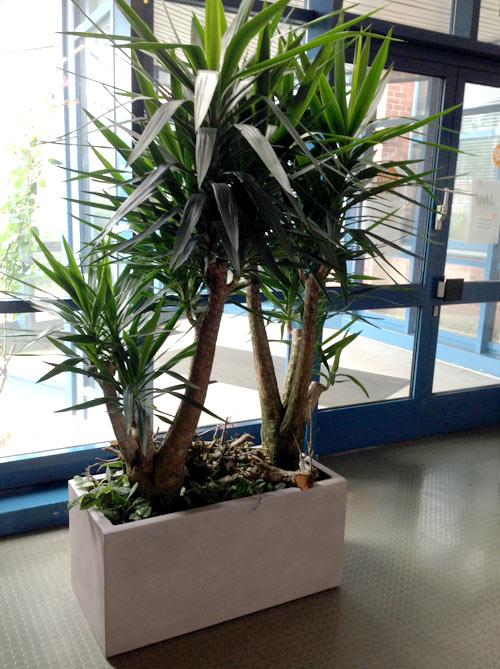 Buropflanzen Blumen Kaiser